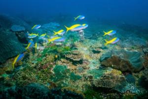 RS93_nihiwatu_underwater-2
