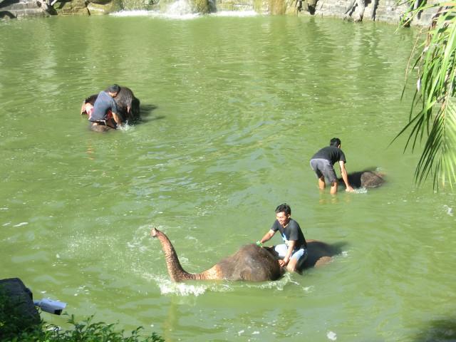 象の水浴び1